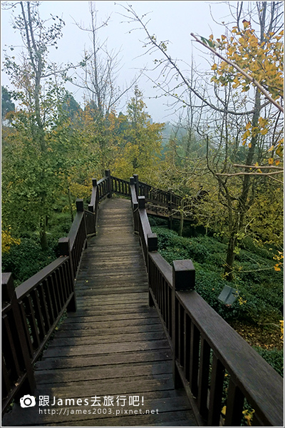 【南投旅遊】銀杏森林、大崙山茶園觀景台 11.JPG