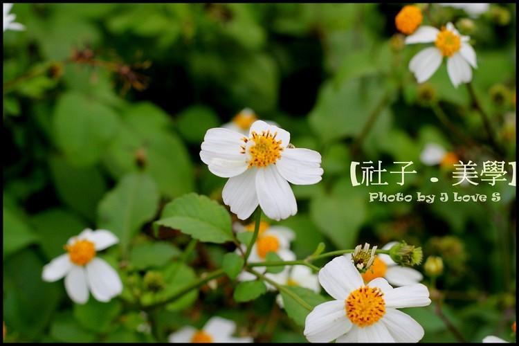 1ba389b7d880.jpg