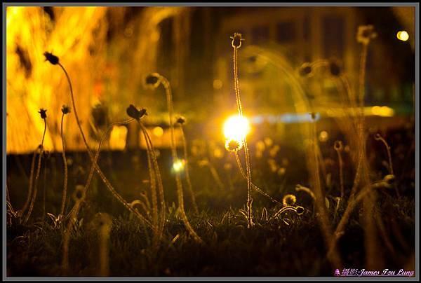Light-00110