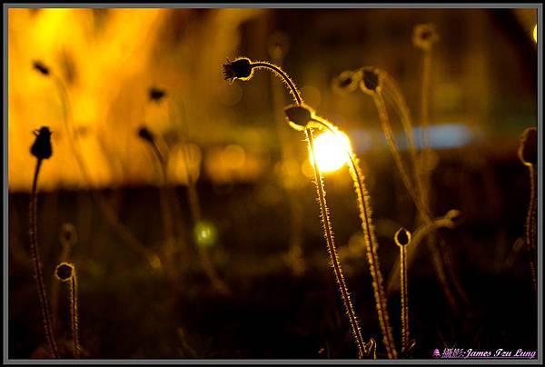 Light-00111