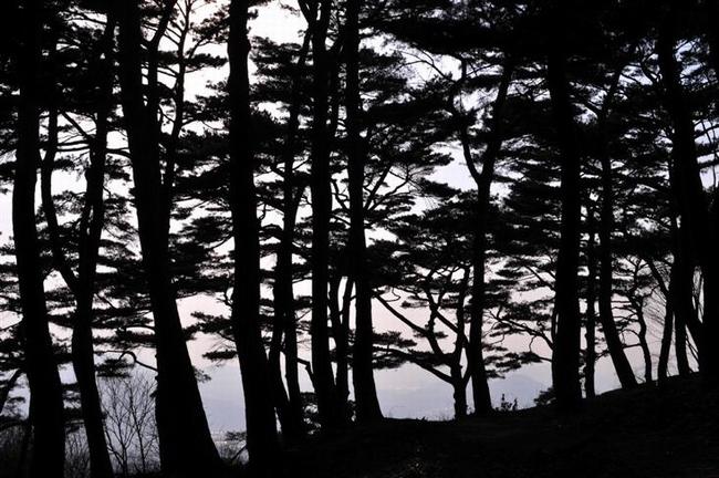 樹林1 (400x300, 15Kb)