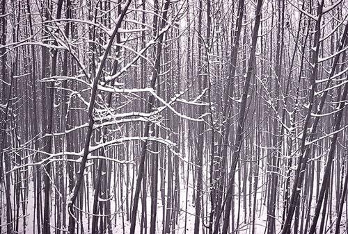 立冬.jpg