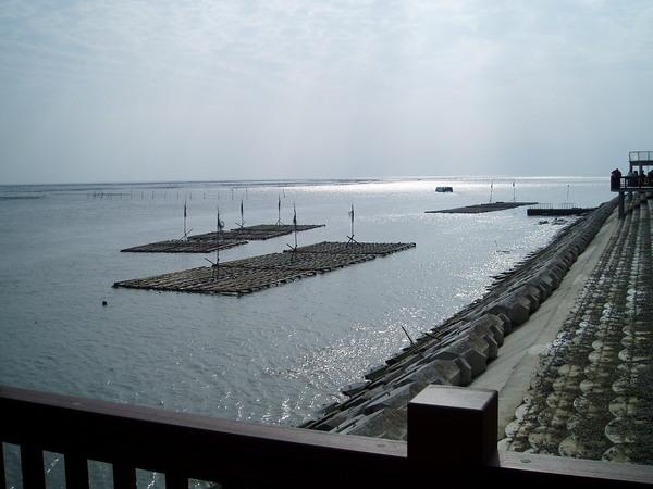 東石漁港的蚵架