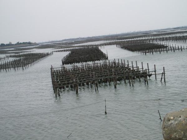 布袋漁港的蚵架