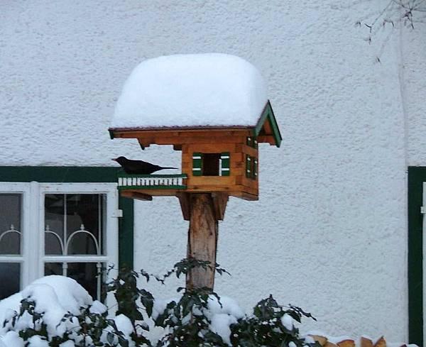鳥屋 11