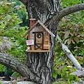 鳥兒小木屋 (1).jpg