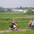 荷蘭運河旁的田園風光!