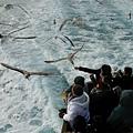 流冰船,海鷗盤旋四周