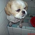 洗澡中無奈的溫妮