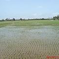 回程經過稻田