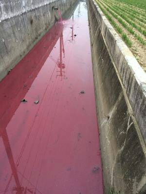 嘉義縣東石鄉港墘村一條排水溝遭排放廢水