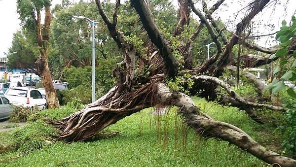 風災過後,台北如大樹末日,倒下的樹木創下歷史新高