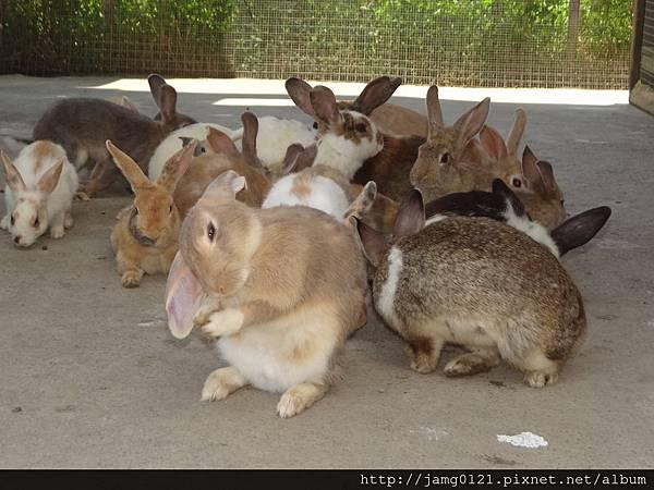 台灣也有兔子島_25.JPG