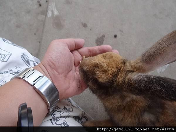 台灣也有兔子島_27.JPG
