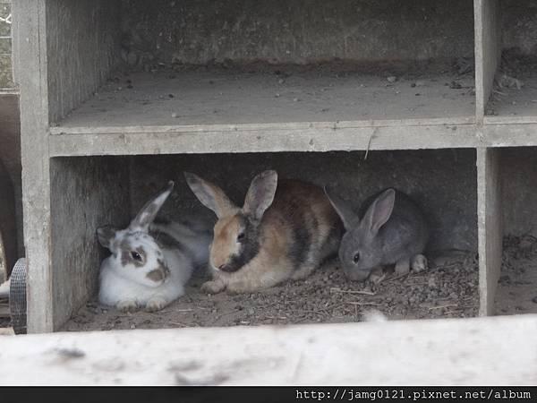 台灣也有兔子島_37.JPG