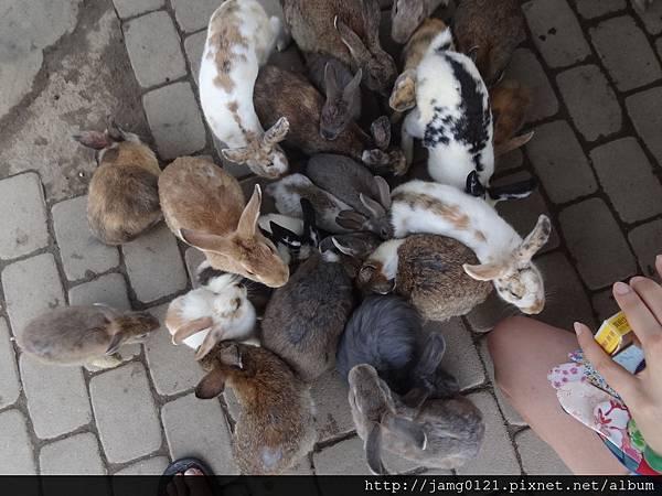 台灣也有兔子島_40.JPG
