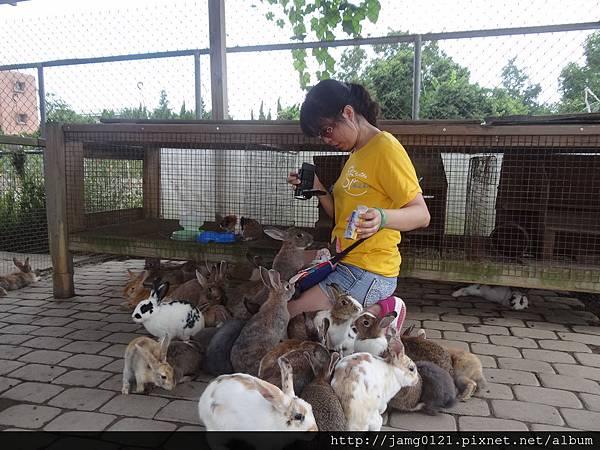 台灣也有兔子島_41.JPG