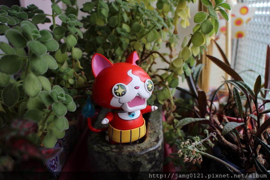 地縛貓參見_01.JPG