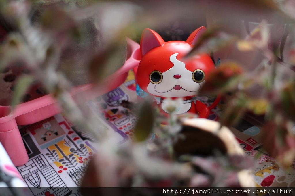 地縛貓參見_09.JPG