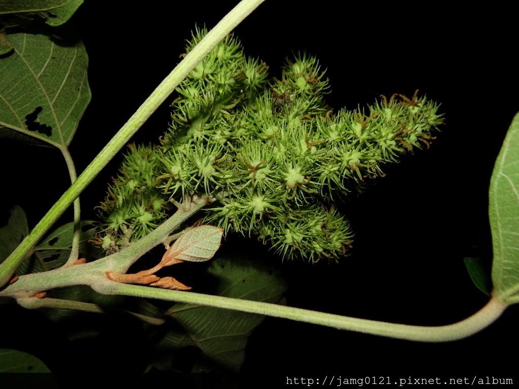 東湖菜園夜拍_06.JPG