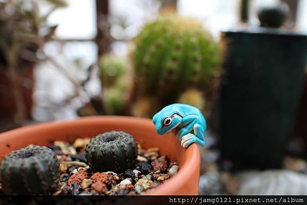 青蛙杯緣子扭蛋_01.JPG