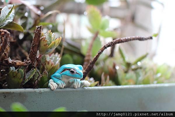 青蛙杯緣子扭蛋_02.JPG
