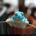 青蛙杯緣子扭蛋_05.JPG