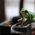 青蛙杯緣子扭蛋_11.JPG