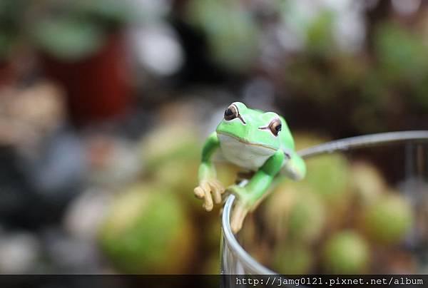 青蛙杯緣子扭蛋_12.JPG