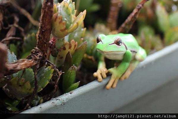 青蛙杯緣子扭蛋_13.JPG