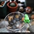 青蛙杯緣子扭蛋_14.JPG