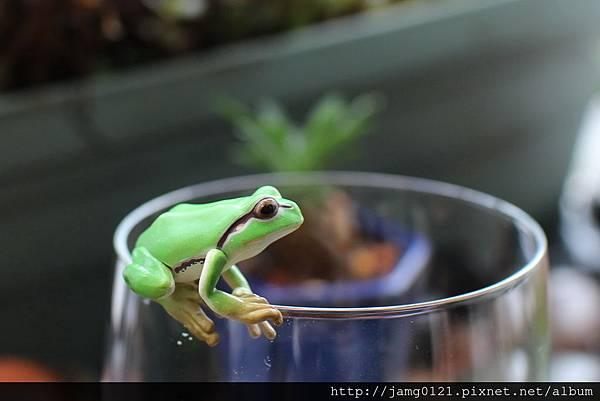 青蛙杯緣子扭蛋_15.JPG