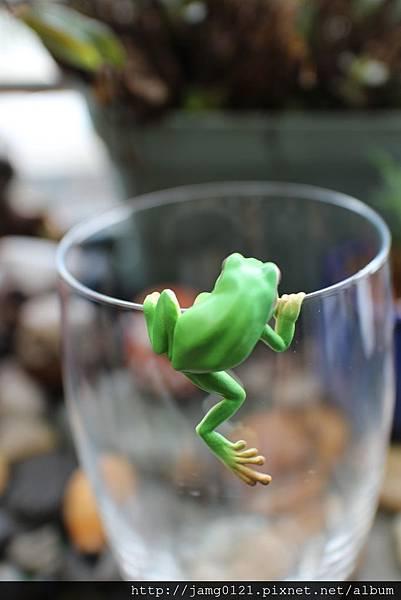 青蛙杯緣子扭蛋_20.JPG