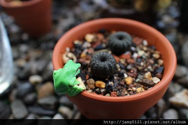 青蛙杯緣子扭蛋_23.JPG