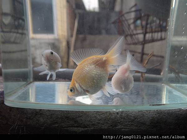 撈魚小珠半年紀錄_10.JPG
