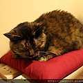 貓咪貓咪Catcat 桌遊咖啡屋雙連店_14.JPG