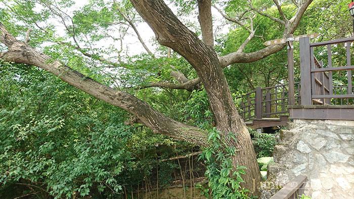 藤蔓攀附著樹木.jpg