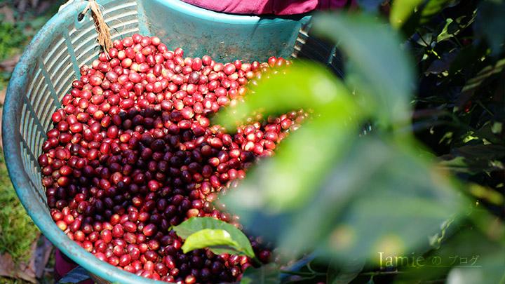 巴拿馬詹森莊園藝geisha詹森藝妓,走出來看看美景,喝了杯咖啡,麵包已經烤好了,你家就是我家的自有品牌出的新茶品蘋果紅茶因為一杯沖不好的咖啡,你家就是我家的出的新茶飲.jpg