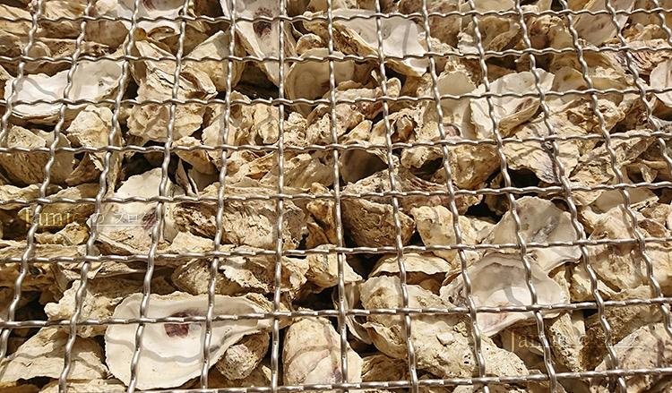 蛤蜊殼裝置藝術.jpg