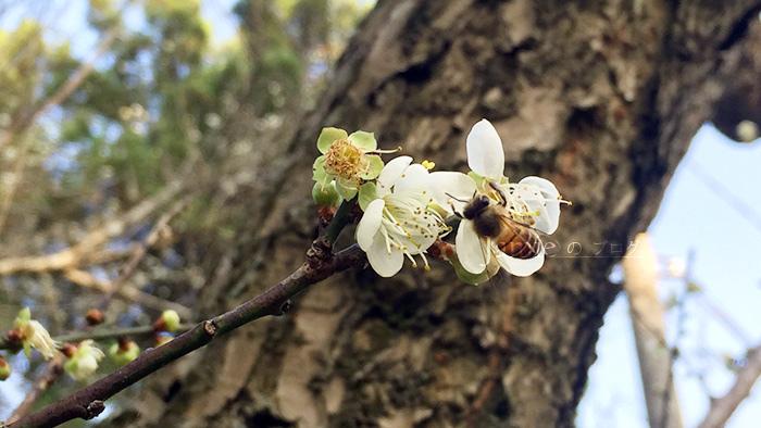 漂亮眉蜜蜂出現.jpg