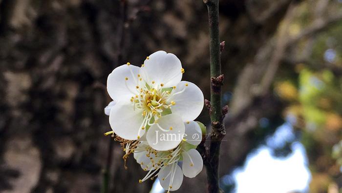 JAMIE盛開的花.jpg