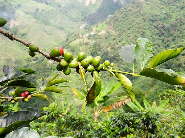 Columbian Coffee.jpg
