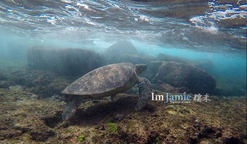 iuqiu_Turtle.jpg