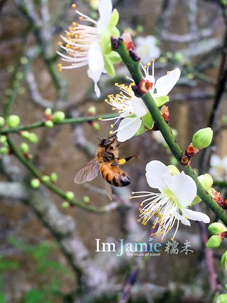 bee_ flower.jpg