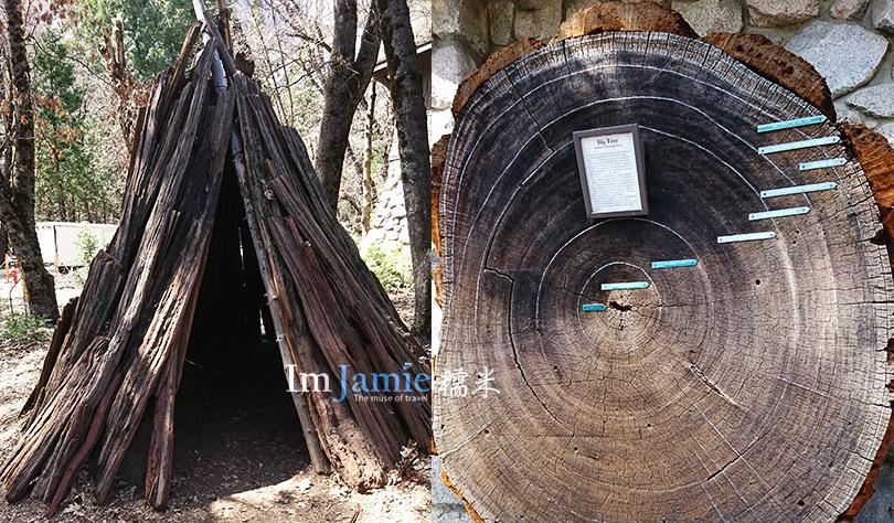 Yosemite_印地安人超大年輪的木片,跟他們早期搭的小木屋