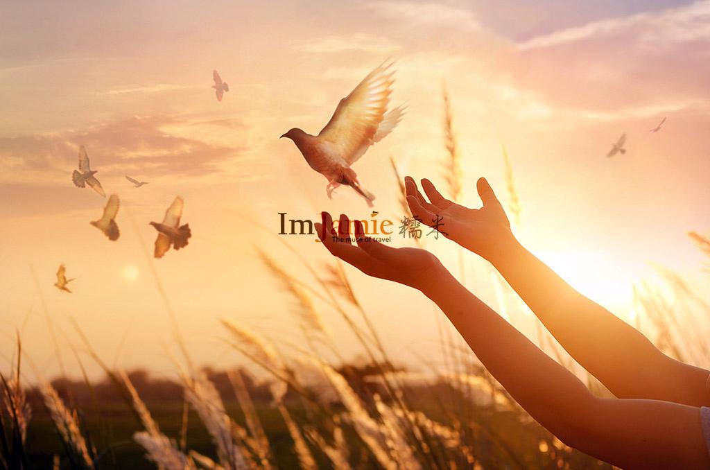 認為路西法是地球上邪惡與黑暗的導因,迎向希望的白鴿.jpg