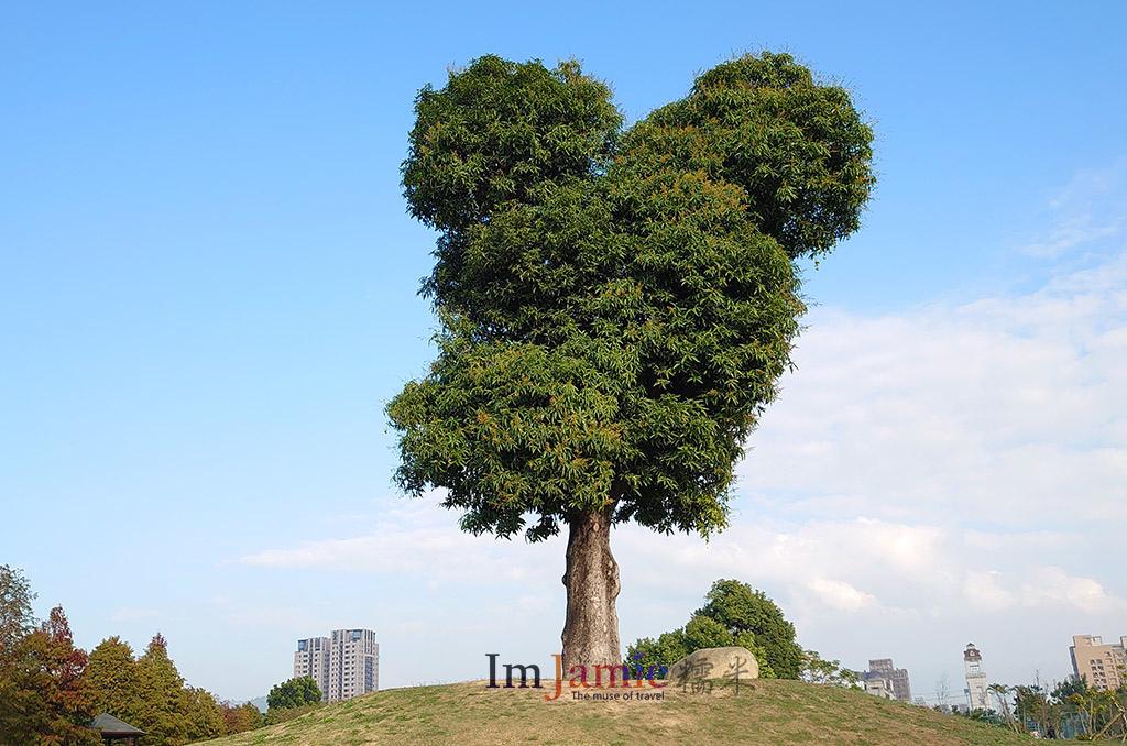 台中米奇樹.jpg