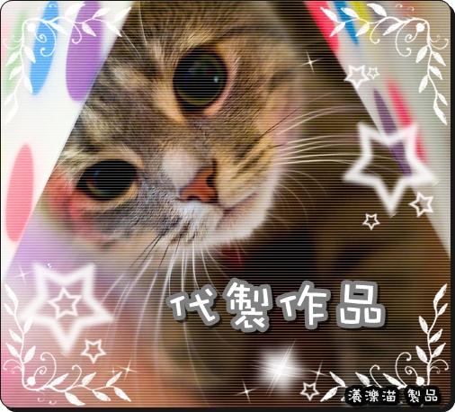 cute_cat_01.jpg
