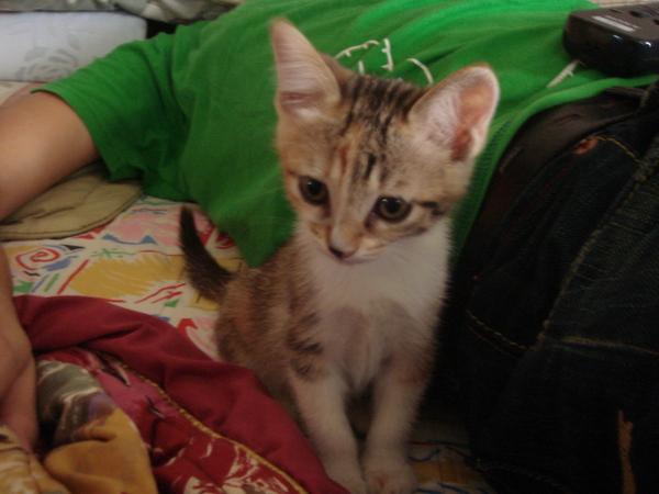 家裡其他兩隻小野貓