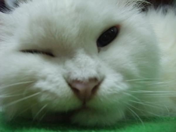 王瑩一直很想要這個表情
